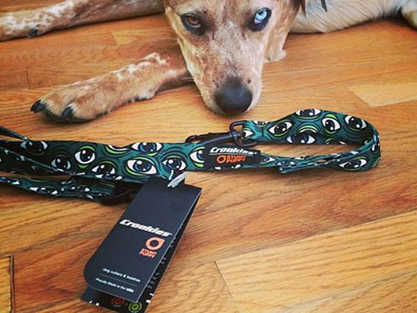 Croakies Stunt Puppy Collar