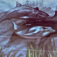 MIDthumb_v1_dolphin